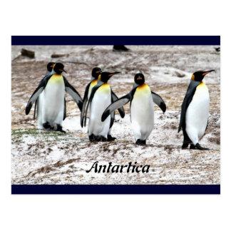 Penguins in frigid Antartic Postcard