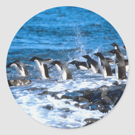 Penguins Leaping Classic Round Sticker
