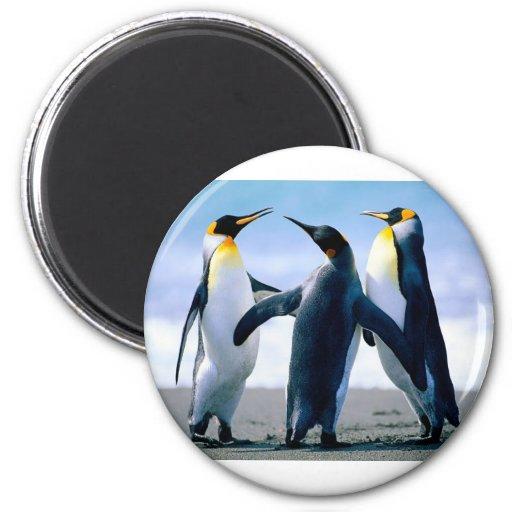 Penguins Refrigerator Magnet