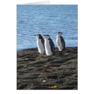 Penguins on a beach card