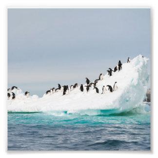 Penguins on Iceberg Art Photo