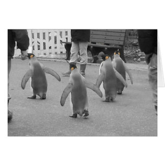 Penguins on Parade Card