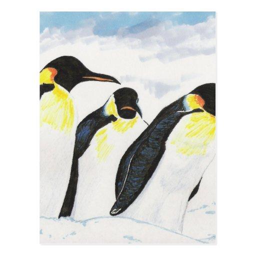 Penguins Postcard