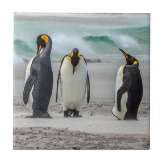 Penguins preening on beach tile