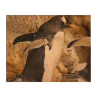 Penguins Queork Photo Print