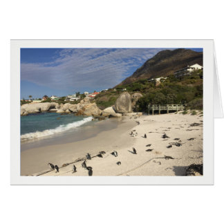 Penguins South Africa Card