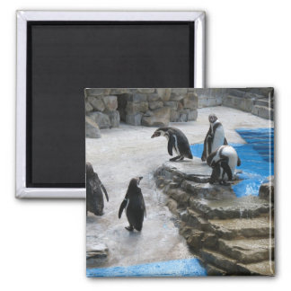 Penguins Square Magnet