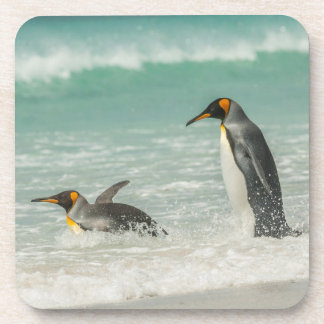 Penguins swimming on the beach coasters