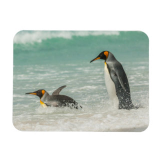 Penguins swimming on the beach magnet