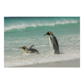 Penguins swimming on the beach poster