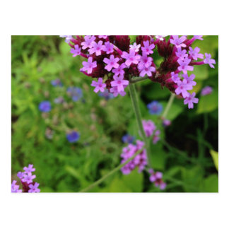 Penland Purple Flower: Sallie by My Side Postcard