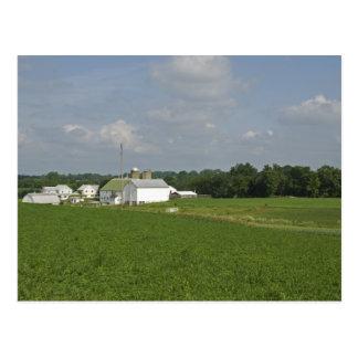 Pennsylvania Countryside Postcard