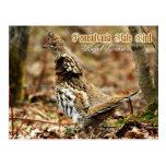 Pennsylvania State Bird: Ruffed Grouse Postcards