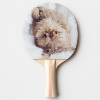 Penny orange liver Shih Tzu pup ping pong paddle