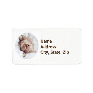 Penny orange liver Shih Tzu puppy address labels