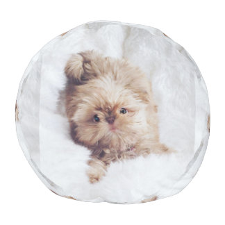 Penny orange liver Shih Tzu puppy round pouf seat