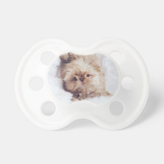 Penny the orange liver Shih Tzu on Cloud 9 Pacifier