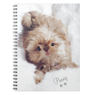 Penny the orange liver Shih Tzu on Cloud 9 tablet Notebooks