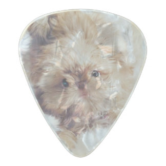 Penny the orange liver Shih Tzu puppy guitar pick