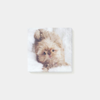 Penny the orange liver Shih Tzu puppy Post-it note