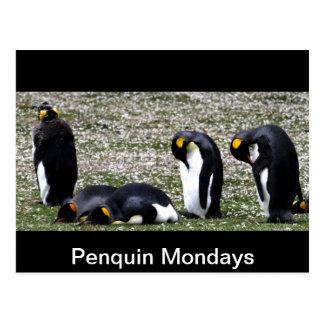 Penquin Mondays Postcard