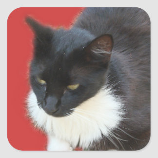 Pensive Kitty Square Sticker
