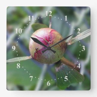 peony bud clock