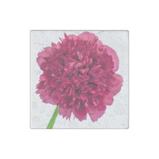 Peony Flower Isolated On White Background Stone Magnet
