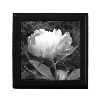 Peony in Black and White Gift Box