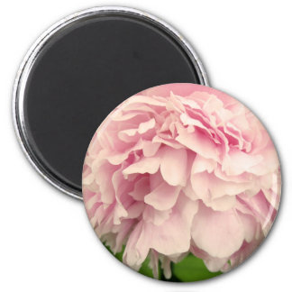 Peony Petals 2 Inch Round Magnet