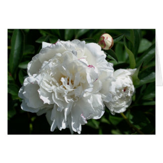 Peony Phases Flower Photography Card