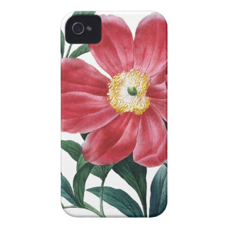 Peony Redoute botanical illustration iPhone 4 Cover