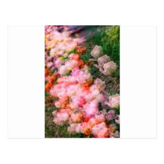 Peony Tulips in Full Bloom Postcard