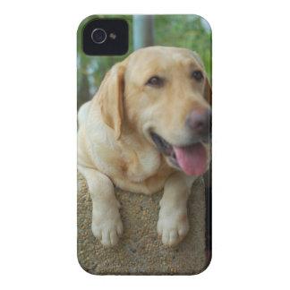 Pepper Blackberry iPhone 4 Cases