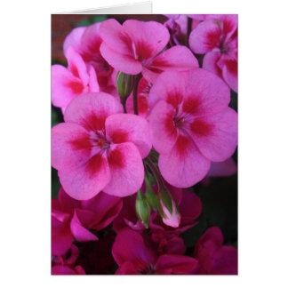 Peppermint Pink Geranium 2 Card