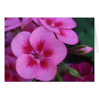 Peppermint Pink Geranium Card