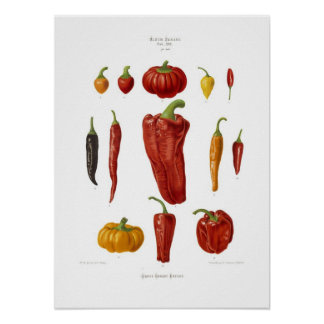Peppers Poster