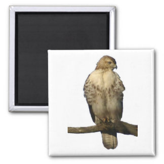 Perched Hawk Magnet