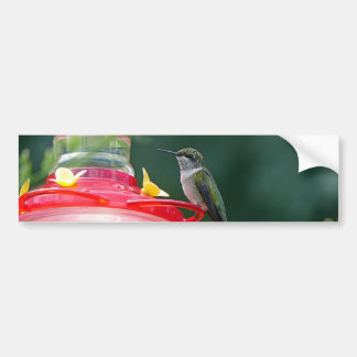 Perched Hummingbird Bumper Sticker