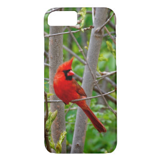 Perched Male Northern Cardinal iPhone 8/7 Case