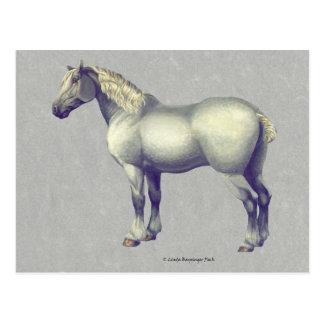Percheron Horse Equine Art Postcard