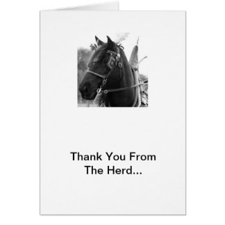 Percheron Thunder In Harness Thank You Cards
