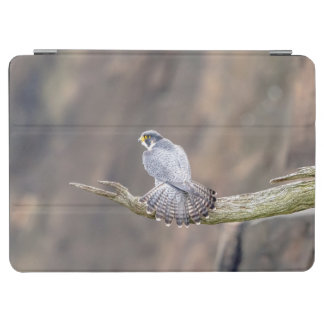 Peregrine Falcon at the Palisades Interstate Park