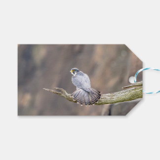 Peregrine Falcon at the Palisades Interstate Park Gift Tags