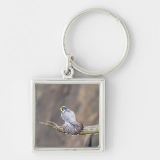Peregrine Falcon at the Palisades Interstate Park Keychain