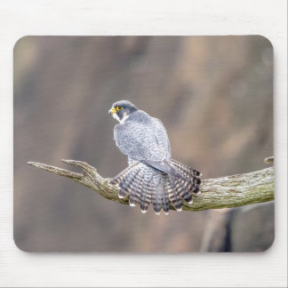 Peregrine Falcon at the Palisades Interstate Park Mouse Pad