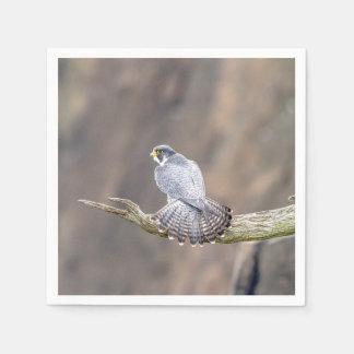 Peregrine Falcon at the Palisades Interstate Park Napkin