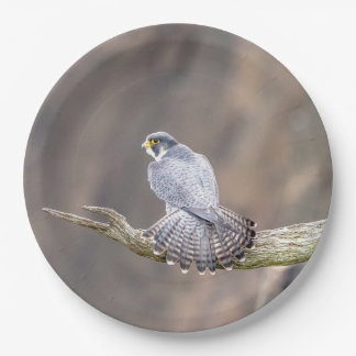 Peregrine Falcon at the Palisades Interstate Park Paper Plate