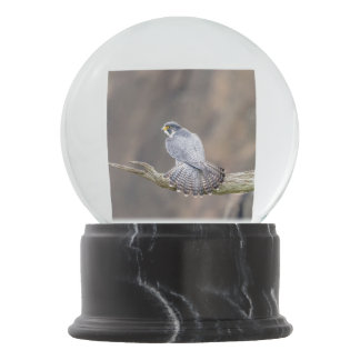 Peregrine Falcon at the Palisades Interstate Park Snow Globe