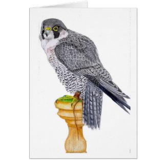 Peregrine Falcon Birthday Card